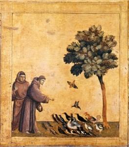François et les oiseaux